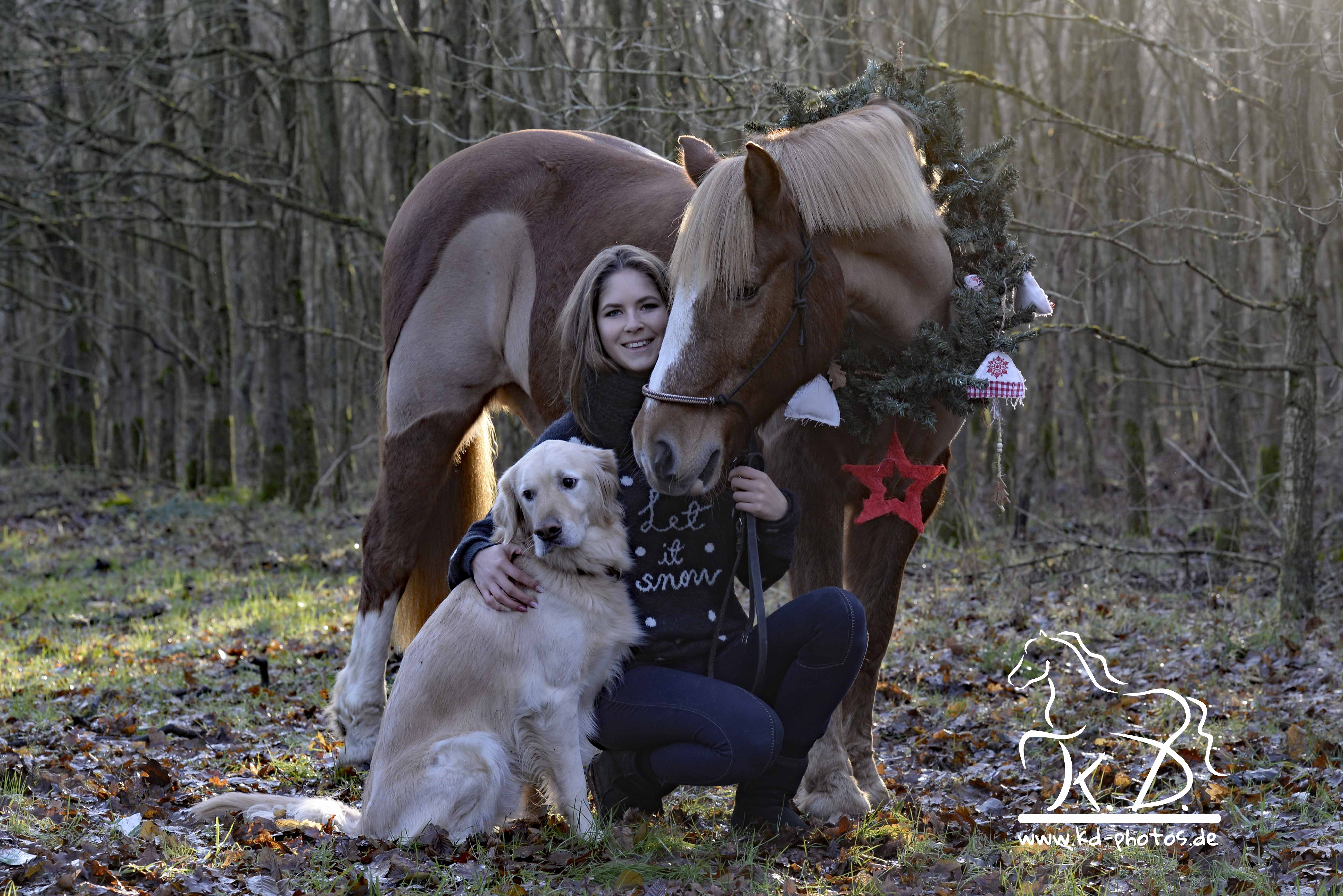 Haflinger Weihnachts Shooting