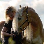 Fotoshooting mit Haflinger © Karen Diehn